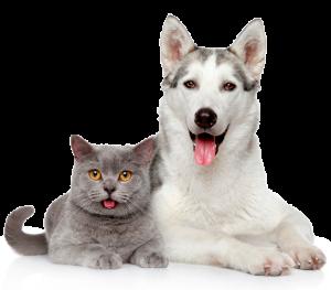 Cachorro Gato Veterinário a Domicílio